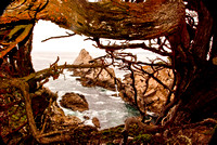 POINT LOBOS -WEST POINT- 12 2009