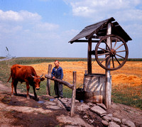 LAD AND COW AT WELL